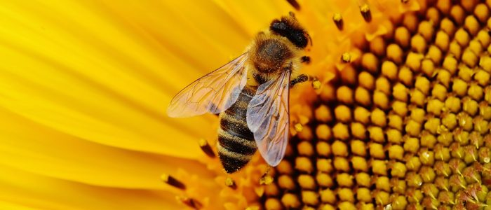 Busy Bee Symbolism