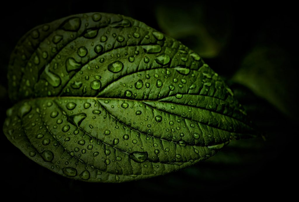 Green Leaf Jewellery