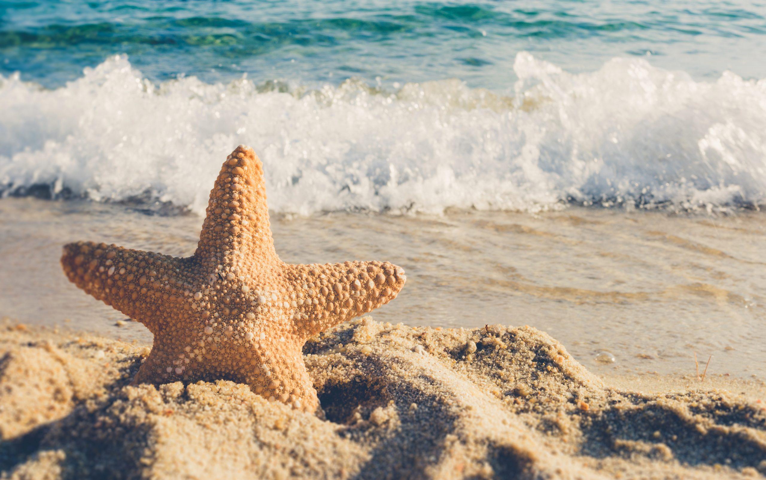 Starfish Symbolism