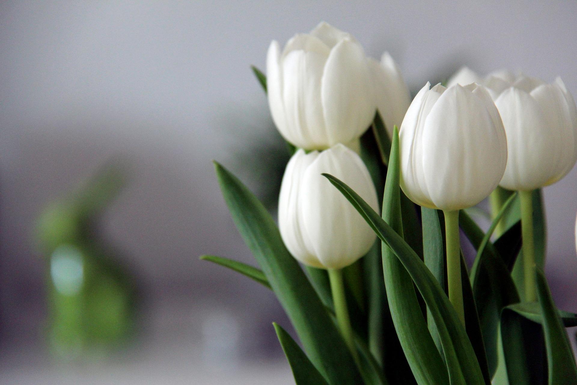Tulip Jewellery